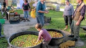 du-jus-de-pomme-sous-le-soleil-chantiers-en-cour